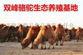 骆驼奶粉厂家招商,驼奶粉代理,经销加盟