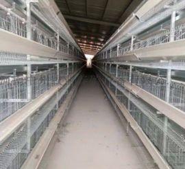 育雏笼 小肉鸡笼 阶梯式蛋  笼子 肉鸡笼养殖设备