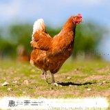 咸阳蛋鸡青年鸡,咸阳蛋鸡青年鸡雏鸡苗