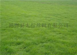 咸阳人工草坪运动操场草坪网人造草坪地毯