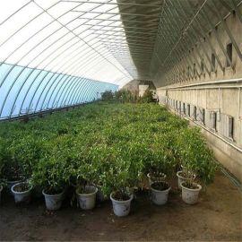 日光花卉温室建设日光温室大棚