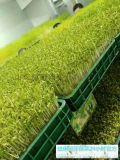 100平方米芽苗菜种植利润多少钱-益康园