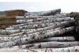桦木原木烘干板材