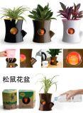 松鼠花盆(辦公盆栽、桌面植物、防輻射花盆)