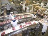 食品輸送機, 食品皮帶輸送機, 冷凍食品輸送機