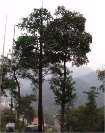 供应单管仿生树塔