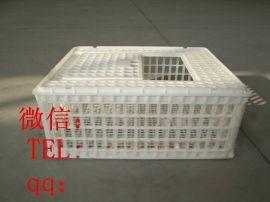 家禽运输笼 塑料转运笼 成鸡配送箱