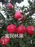滎陽富民軟籽石榴 新鮮水果無公害軟子紅石榴