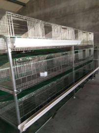 **蛋鸭笼 蛋鸭笼子 自动化养殖笼具蛋鸭笼养视频