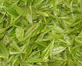 植物提取物之绿茶提取物Green tea extract powder