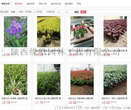 花卉市场性价比