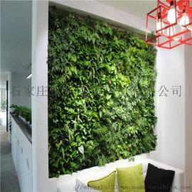 張家口綠植植物壁報價