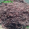 供應園林景觀用白鵝卵石 機制鵝卵石2-100MM
