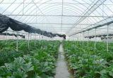 """农业物联网传感器——打开农业的""""千里眼"""""""