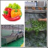 全自动水果蔬菜清洗机 商用全自动水果蔬菜清洗机
