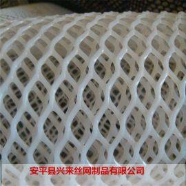 pvc塑料网 塑料塑料网 自制育雏网床图片