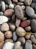 廠家長期供應批發天然鵝卵石 機制鵝卵石 彩色鵝卵石 拋光鵝卵石