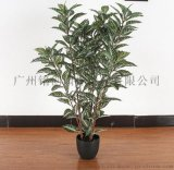 模擬植物模擬盆栽模擬灑金榕斑葉