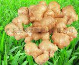 供应姜粉 生姜生粉 各种药材生粉大量供应