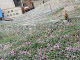 乌海厂家生产边坡落石防护网 边坡防护网 柔性防护网 SNS护坡网