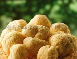 猴头菇片剂代加工 专业定制健康营养片OEM加工