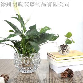 玻璃水培瓶容器铜钱草植物花盆绿萝花瓶透明客厅插花水晶球