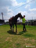 深圳騎馬費用多少