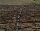 胡蘿卜種植用水肥一體化滴灌系統,滴灌帶