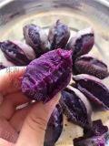 紫薯乾燥設備解決初期含水量問題