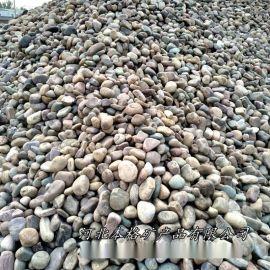 本格廠家供應園林鵝卵石 建築鵝卵石 鋪路鵝卵石