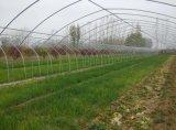 供应宁夏贵州陕西早春晚秋蔬菜种植温室大棚 冷棚 大拱棚建设