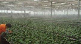 种植大棚喷雾加湿洒药施肥器