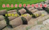 混播草坪價格|河北草皮銷售|石家莊草坪