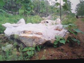 武汉奇石产地报价-湖北太湖石·灵壁石·上吸水石·钟乳石供应