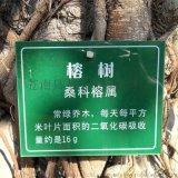 校園樹牌 樹木介紹牌 樹名牌 懸掛樹木花草認養牌