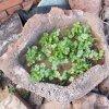 直销 鱼缸造景用火山石种植花卉用火山石