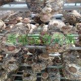 山东青岛出口花菇菌棒、香菇菌棒