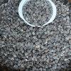 云南满泽灰壳辣木籽大颗粒新鲜饱满/食用种植