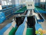 陝西電腦高效率分選獼猴桃大小的機器多少錢?陝西哪裏的獼猴桃好?