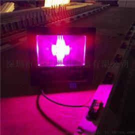 中山鸿悦LED种植灯育苗补光灯厂家低价批发20w30w50w