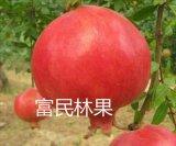 滎陽富民軟籽石榴 純甜不用吐籽