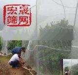 全新料40目辣椒瓜果蔬菜網楊梅枇杷防蟲網大棚防蟲網管用3-5年