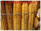玉米网苞米网