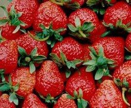 北京草莓保鲜厂家建设
