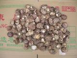 出口花菇产地直销花菇价格
