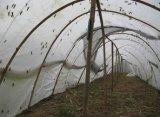大棚蝗蟲養殖網
