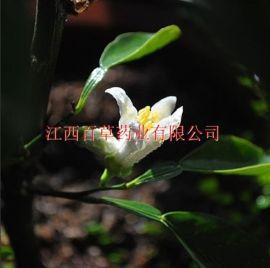 玳玳花油 厂家 植物精油