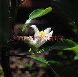 玳玳花油 廠家 植物精油