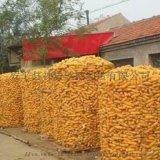 圈玉米铁丝网 厂家直销铁丝网