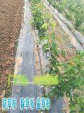 _丽江地区防草布厂家 果园盖草布多少钱